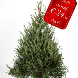 blauwspar kerstboom vanaf €24,95